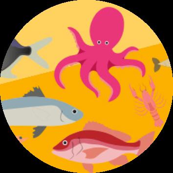 Pescado - Escola Missão Continente